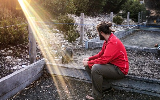 Vegie our nightly visiting Wallaby!